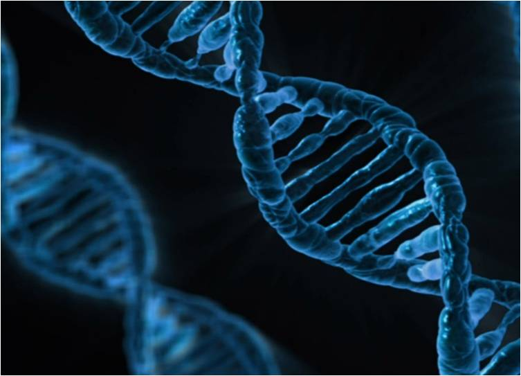 Genome Editing Global Market estimated to be worth $2.6 billion by 2022
